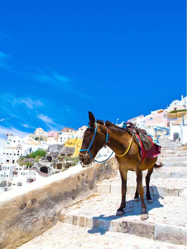 #greece #landscape by @sadna2018 #ilikethispicture #view #animals #freetoedit
