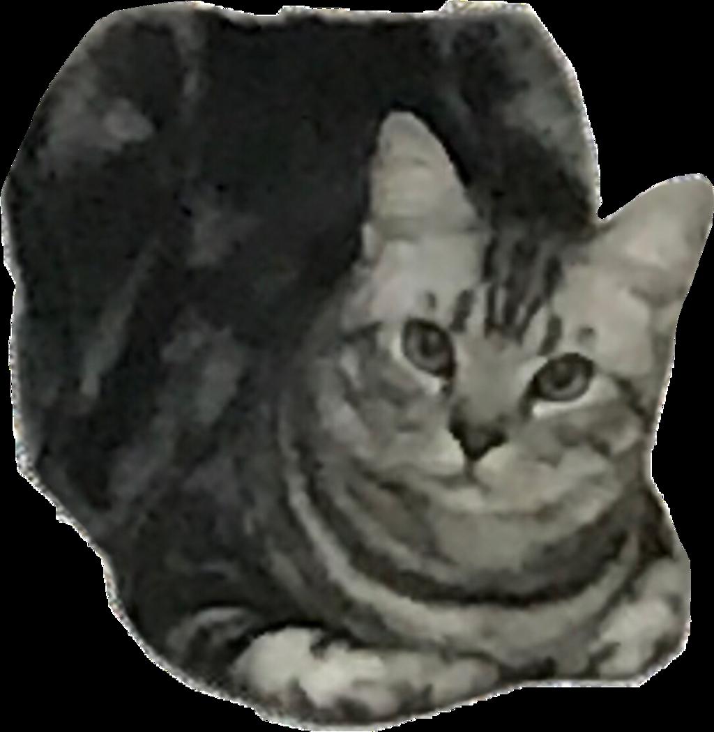 #kitty #freetoedit