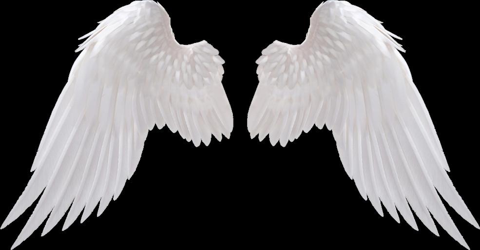#angelwings#white#wings#angel#tumblr#sticker