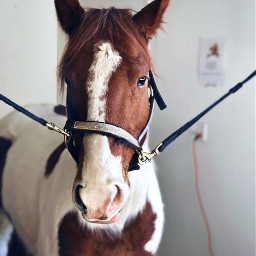 freetoedit horse stable cute pet