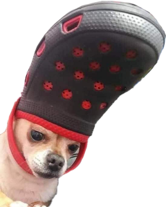 dog doggo meme crocs chihuahua freetoedit