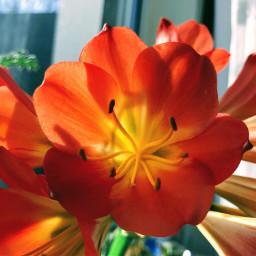 freetoedit sunday flower red