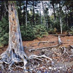 angeleyesimages landscapephotography landscape tree trees freetoedit