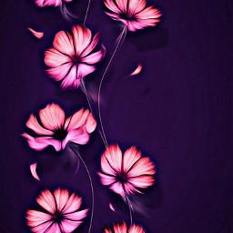 freetoedit purples pinks flowers background