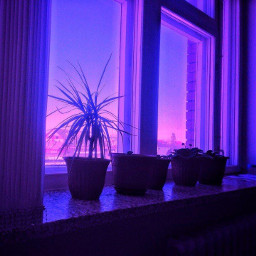freetoedit plants sunsetsky pureelegance aestetic