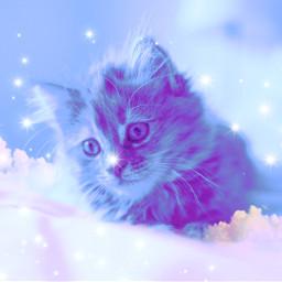 freetoedit galaxy cat stars kitten