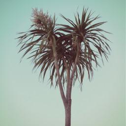 freetoedit nature wildplant theyreflowers yuccaplant