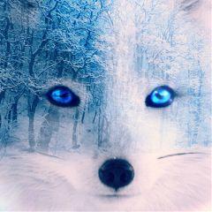kewolf01