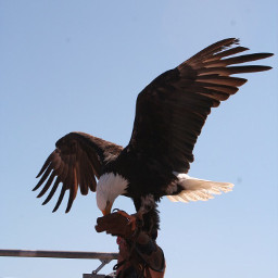 adler eagle nature justgoshoot instaphoto