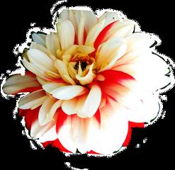 flower sticker challenge contestsubmission freetoedit scfloral