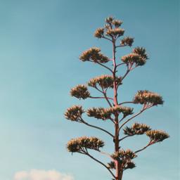 freetoedit nature wildplants cactustree skyandcloudsbackground