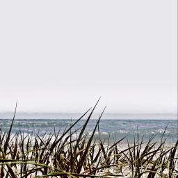 freetoedit chesapeakebay lowangle grass myoriginalphoto