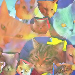 freetoedit mycats catchallengejadyn2018