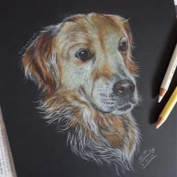 art drawing commission dog goldenretriever