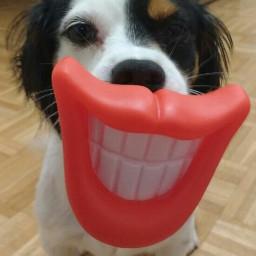 dog freetoedit pcmypetsfavtoy mypetsfavtoy