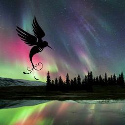 polarlights eisvogel freetoedit