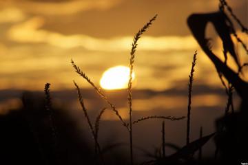 #sun,#catcuratedsun,#sunset