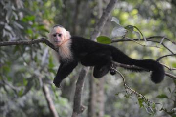 #catcuratedmonkey,#monkey,#monkeys