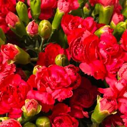 fotoselect buket bouquet karanfil carnation