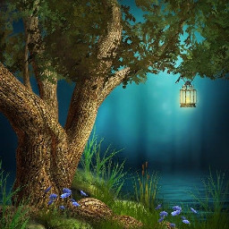 bosque hermoso beautiful