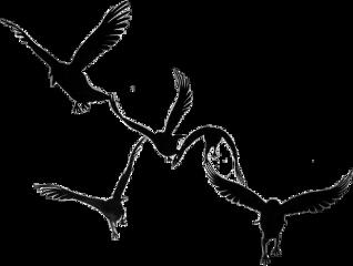 freetoedit black silouette birds shadow