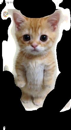 cute invitations cat funny meme freetoedit