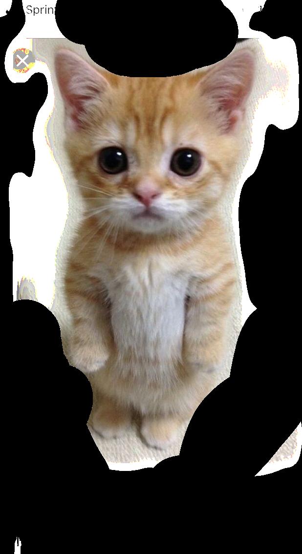 #cute #invitations #cat #funny #meme #freetoedit