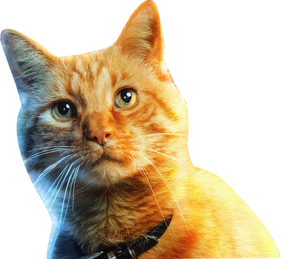 #cat #cats #captainmarvel