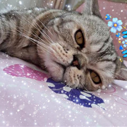 freetoedit кот кошка cat cats