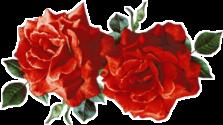 sticker tumblr aesthetic rose red freetoedit