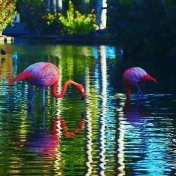 flamingos rosa rose flamencos naturephotography