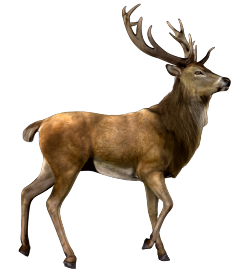 deer nature antlers antler animals freetoedit