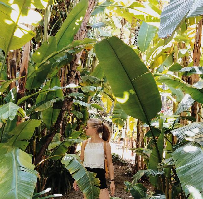 Every summer has its own story 🌴🌴 #summer #palmtree #nature #urlaubkannkommen #tenerife