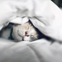 freetoedit cats cat kitty kittycat irccatnap