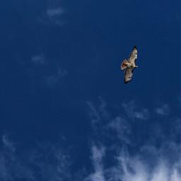 freetoedit blue lookup nofilter hawk pcbird