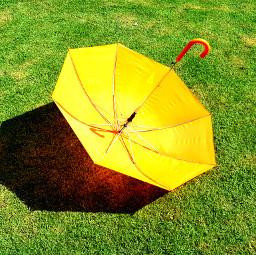 pcumbrellasisee umbrellasisee umbrellas