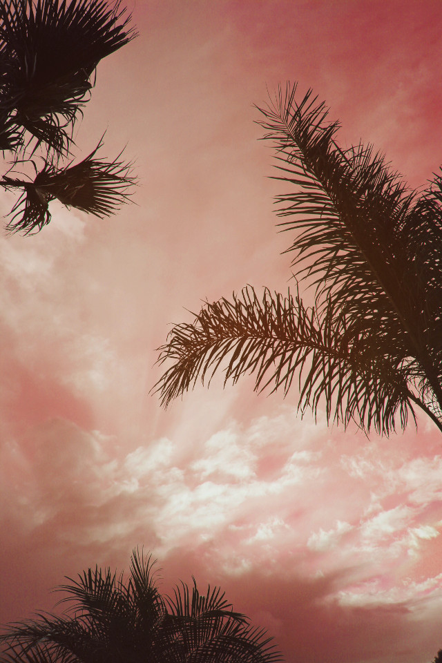 This is #howihue it #nature #sunsettime #palmtrees #againstthelight #silhouettes #skyandcloudsbackground #raysofsunshine #pinksky #myphotomyedit #naturephotography                                                  #freetoedit