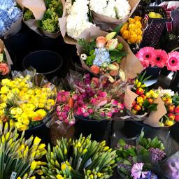 freetoedit spring florals floralbackgrounds floralcanvas