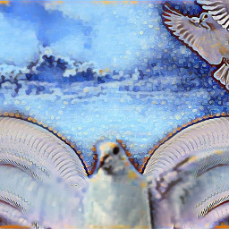 doves artisticedit winterbluesmagiceffect motiontool freetoedit ircspringshoes