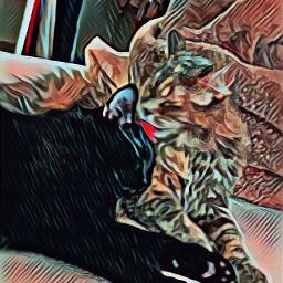 freetoedit kittylove sweetkitty kitties furbabylove