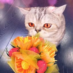 кот кошка украина россия котик