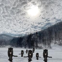srcpanthers panthers freetoedit