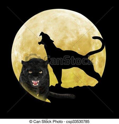 #panther #cleo #design