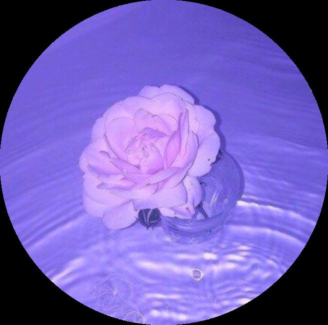 Aesthetic Purple Lightpurple Purpleaesthetic Rose Flowe