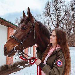 horse horses horselover spring springtime