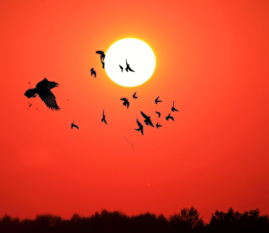 #Sunset #Birds #Sun