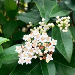 freetoedit springtime spring flower leaf