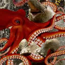 freetoedit unlikeliestoffriends elephant octopus