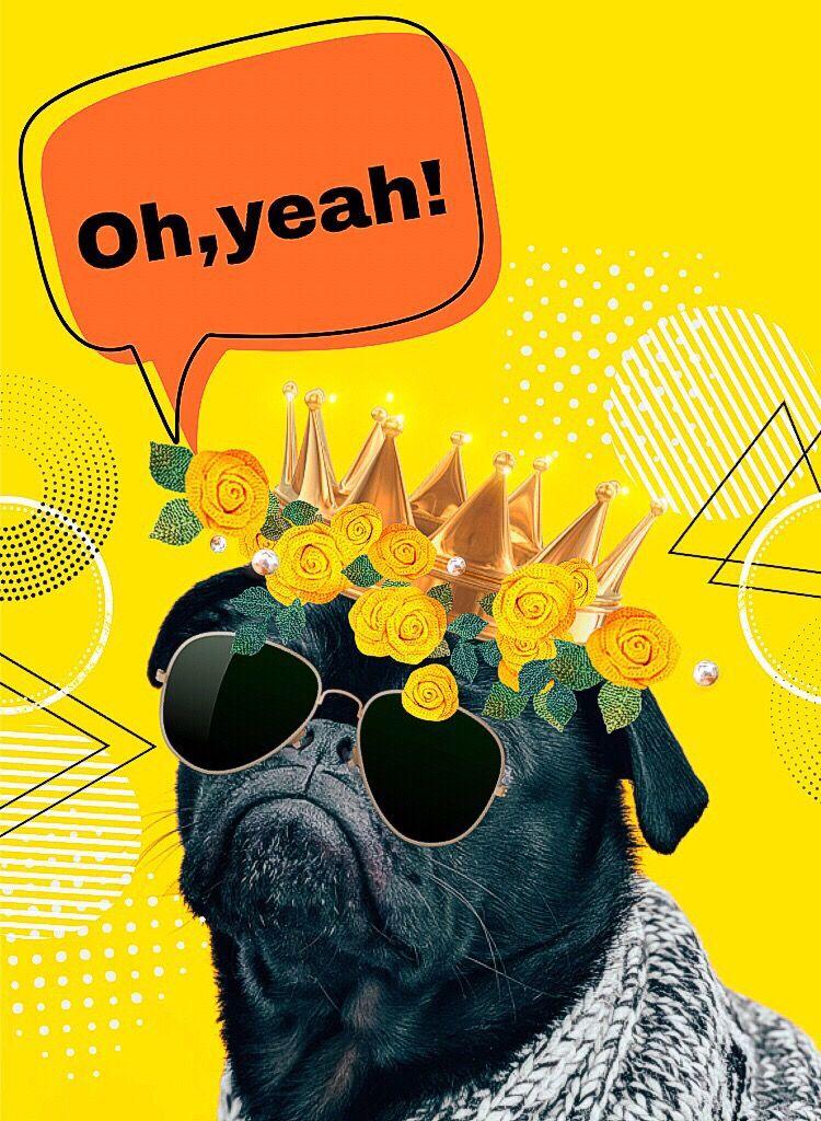 #freetoedit #callout #dog #crown #flowers #kpopbrush #sunglasses