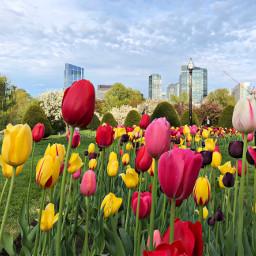pccolorfestival colorfestival freetoedit spring blooming